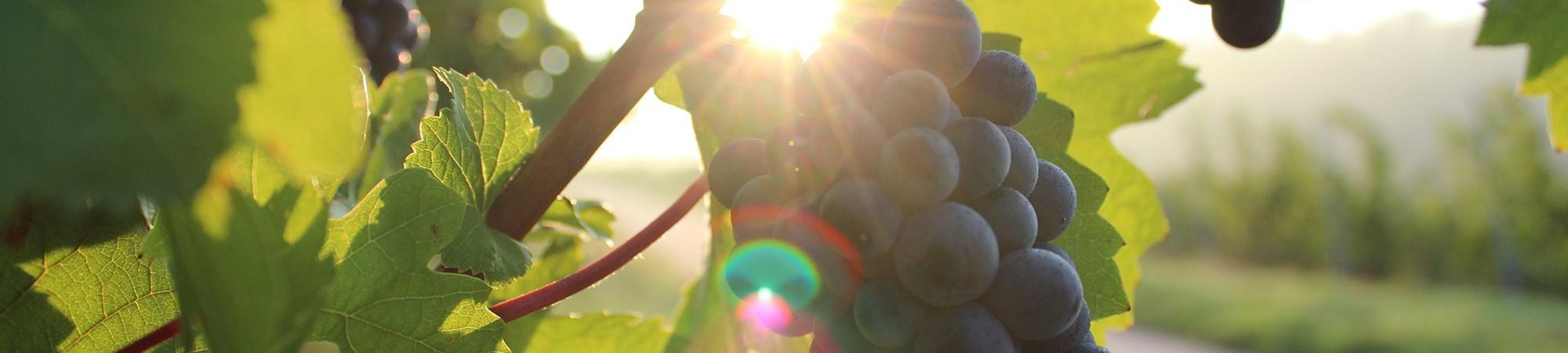 Vertiefung der Weinkenntnisse