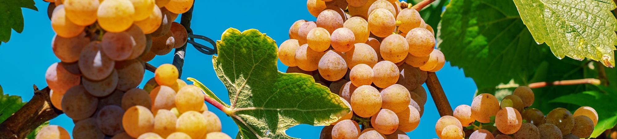 Plattform für Vorträge rund um das Thema Wein