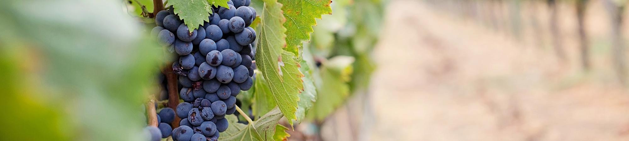 Wein und Kulinarik sowie weinselige Gesellschaft